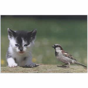 Cadre déco Glass Art chaton et oiseau 40x60 cm